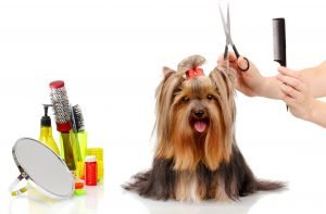 Prevent Pet Hair and Dander From Damaging Your Furnace