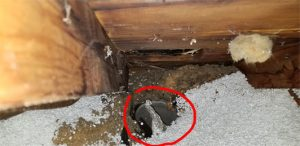 , The Dangers of Improper Roofing Replacement, Bryant Lincoln AC Repair, Heating, Electrical & Plumbing | Lincoln NE